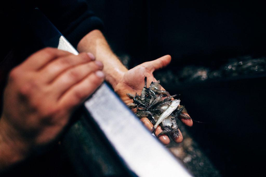 009-PORTFOLIO-Krabbenfischer.jpg